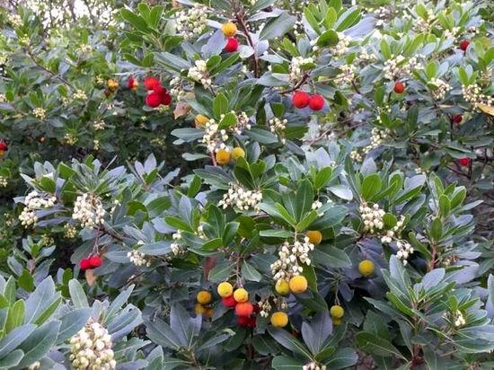 Piante fiori prato pronto macchine agricole e - Siepe di ulivo ...