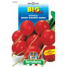 L'ORTOLANO BIG PACK RAVANELLO Rosso Gigante Sardo